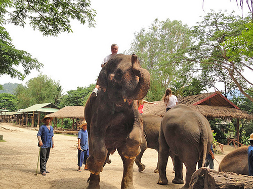 John at Elephant Park in Thailand (2)