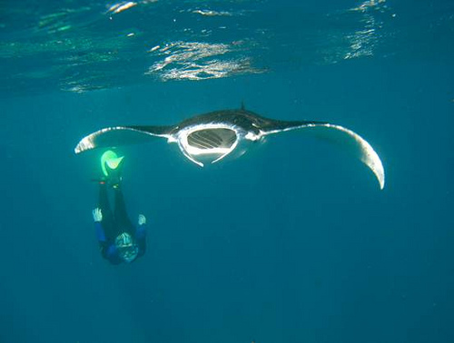 Sheryl Wright and Manta Ray