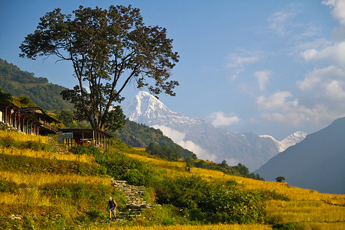 Trekking from Ghandrung to Birethanti During the Fall Harvest