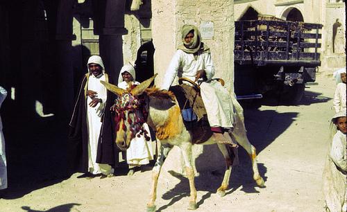 Donkey with Henna - 1939