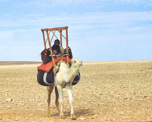 Bedouin Woman - 1949