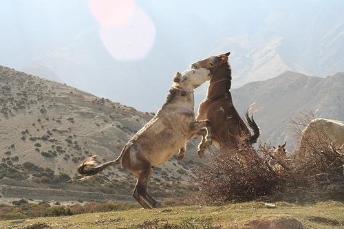 Trekking Mustang Nepal (21)