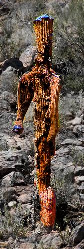 Aramco Reunion: Cactus (4)