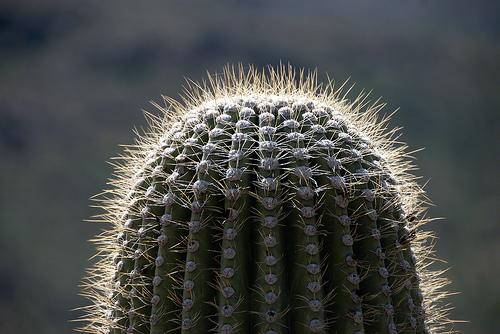 Aramco Reunion: Cactus (5)