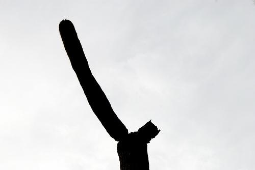 Aramco Reunion: Cactus (2)