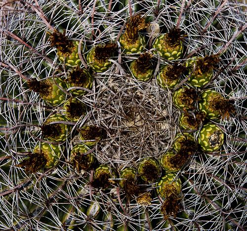 Aramco Reunion: Cactus (1)