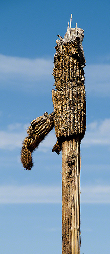 Aramco Reunion: Cactus
