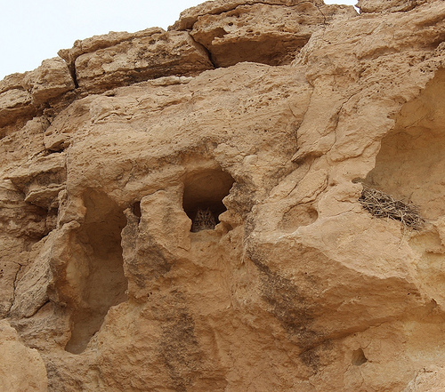 Exploring Around the Ancient City of Haneed (3)